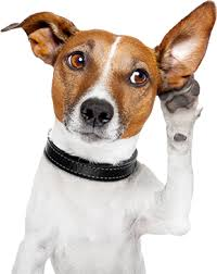 Image of a dog with paw up next to to a raised ear